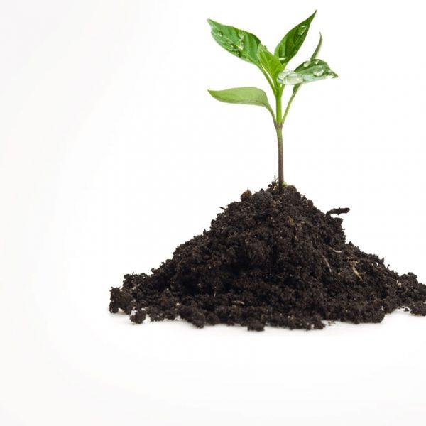 Φυτά Καλλιέργειας