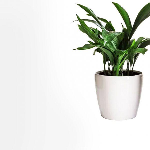 Φυτά Καλλωπιστικά